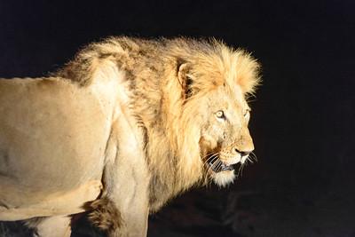 Naledi Bush Camp, Balule Nature Reserve, Kruger Private Reserves