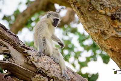 Mjejane River Lodge, Mjejane Game Reserve, Kruger National Park