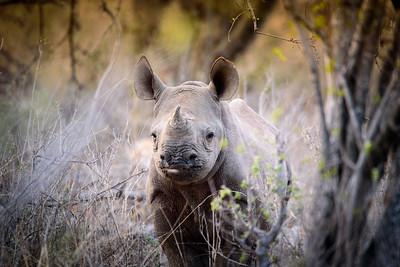 Somewhere in Greater Kruger Parks