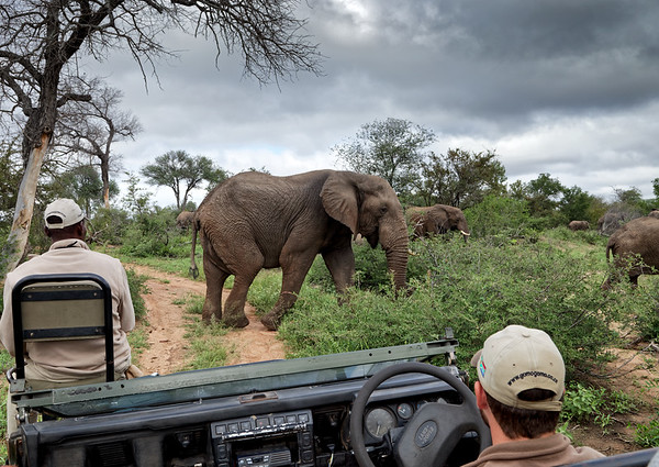 Surrounded by elephants on a Gomo Gomo game drive, Klaserie Private Reserve, Greater Kruger National Park