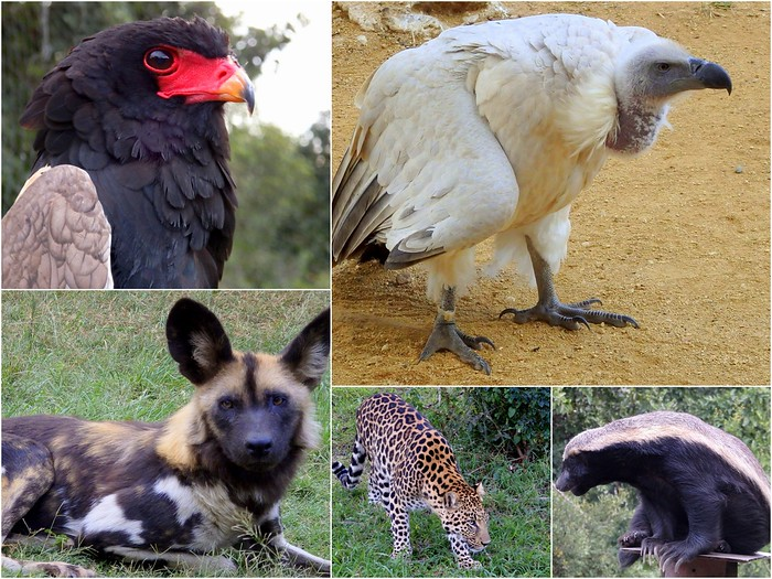 Moholoholo Wildlife Rehabilitation Centre