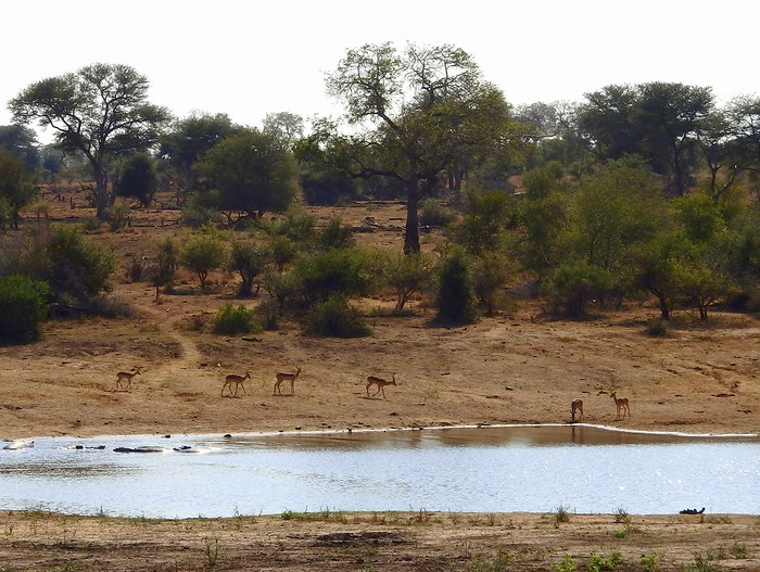 Watching wildlife by the watering hole on safari in Kruger National Park