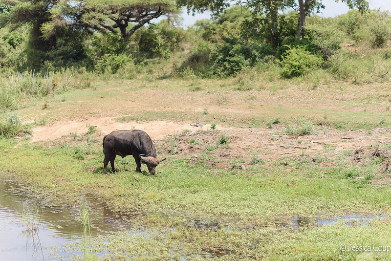 One of the Big Five