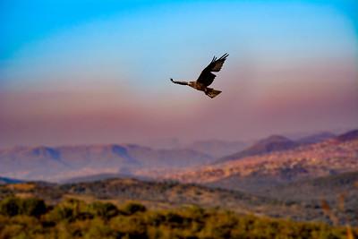Kite above the mountains