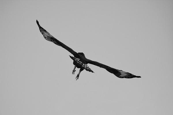 Fly away eagle