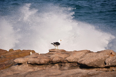 A gull against the waves