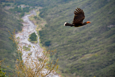 Flight across the gorge