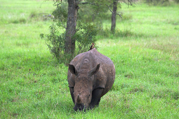 Safari Day 1