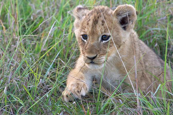 Safari Day 2