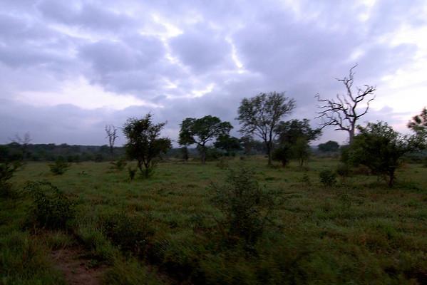 Safari Day 5 - the Last Drive