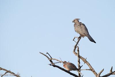 Kruger, Inyate, South Africa-15