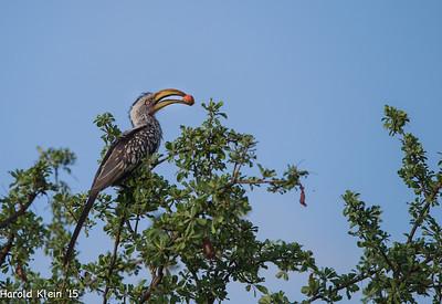 Kruger, Inyate, South Africa-17