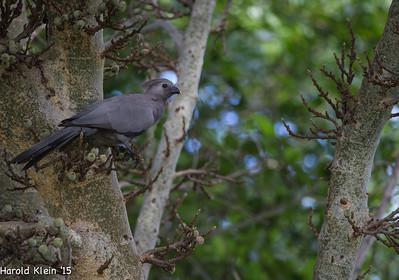Kruger, Inyate, South Africa-7