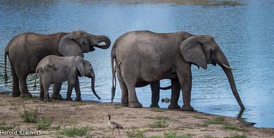 Kruger, Inyate, South Africa-9