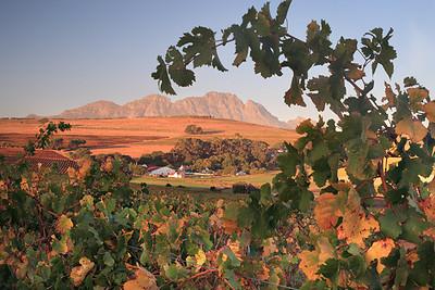 Devon Valley and Simonsberg, Stellenbosch