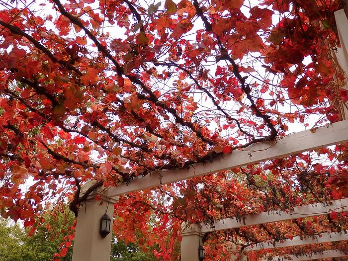 Wine Tour in Stellenbosch in Autumn