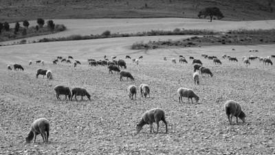 Field near Greyton 2010