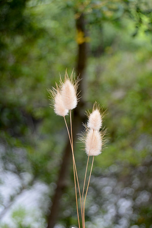 Bunny tails along a forest trail