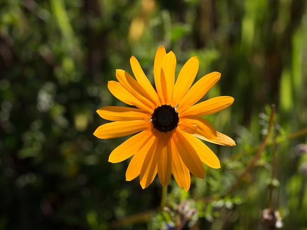 Namaqualand Wild Flowers
