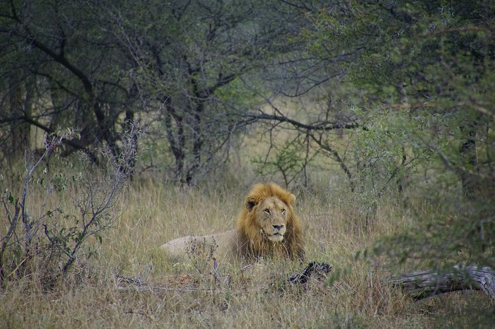 Spotting lions on our safari in South Africa