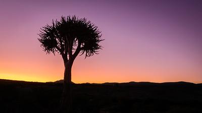 Kokerboom, Springbok, Northern Cape
