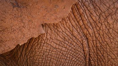 Addo Elephant National Park near Port Elizabeth