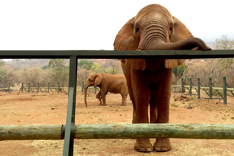 Hartbeespoort Elephant Sanctuary, Hartbeespoort, South Africa