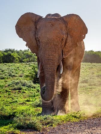 Addo Elephant National Park, Port Elizabeth
