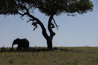 Baby Elephant, Kapama
