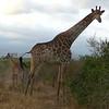 107 Kruger National Park