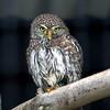 Dullstroom Bird of Prey Rehab Center