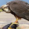 014 Dullstroom Bird of Prey Rehab Center