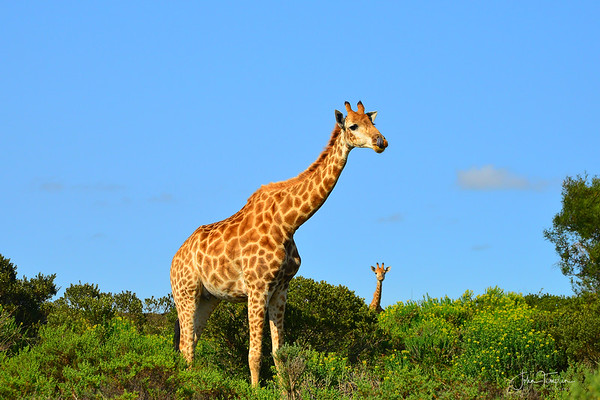 South African Adventure  2014