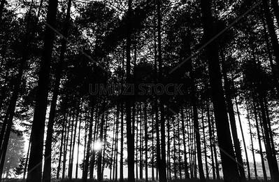 UmuziStock_South African _ Landscapes_Home_113