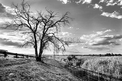 UmuziStock_South African _ Landscapes_Home_107