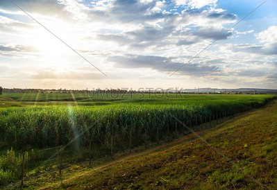UmuziStock_South African _ Landscapes_Home_109