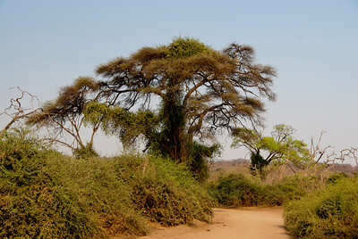African Bush_MLD4167-Edit
