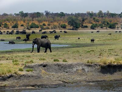 IMG_1286 Elephants