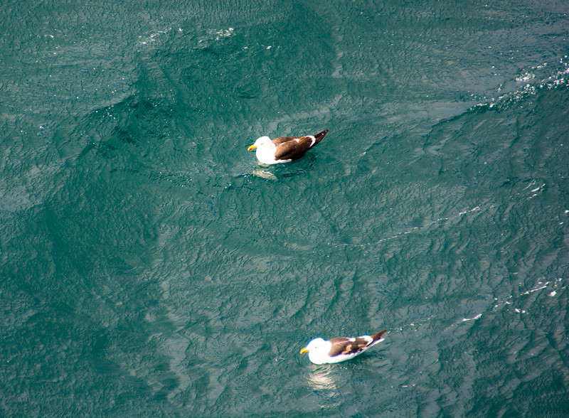 CapePacific_042