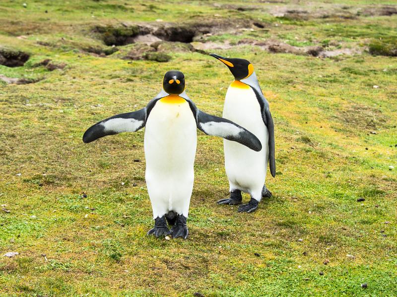 Penguins2_127