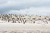 Penguins2_064