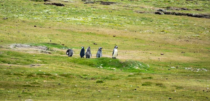 Penguins2_101