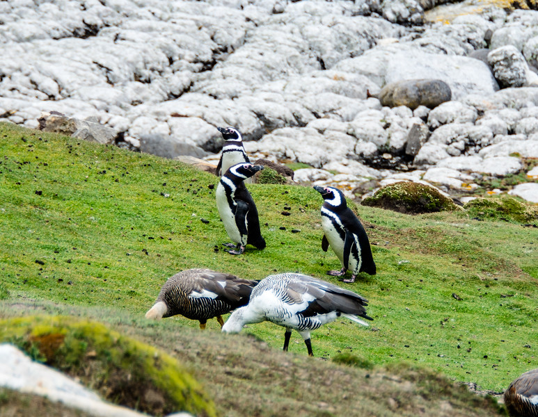 Penguins2_108