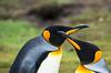 Penguins2_123