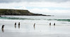 Penguins2_070