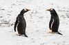 Penguins2_084