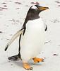 Penguins2_082