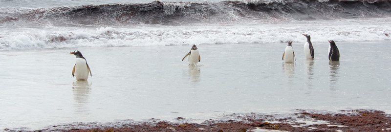 Penguins2_073