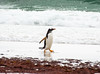 Penguins2_078
