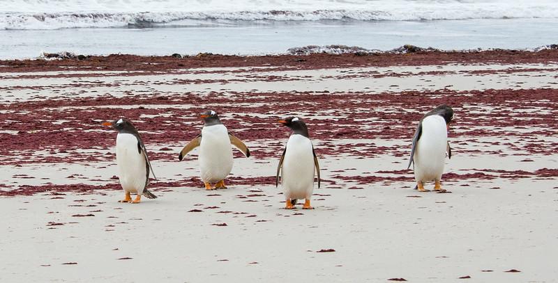 Penguins2_079